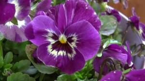 FlowerFestival_CH_20140409_020