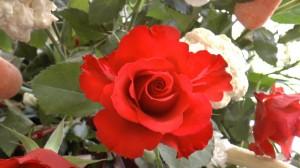 FlowerFestival_CH_20140409_026